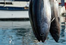 Siracusa| Presenza di istamina nel tonno: precauzione nell'acquisto e nella conservazione