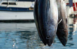 Siracusa  Presenza di istamina nel tonno: precauzione nell'acquisto e nella conservazione