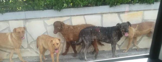 """Augusta  """"Meno Tari per chi adotta un cane"""": la proposta di Tribulato e Pasqua."""