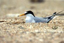 Augusta| Natura Sicula denuncia alla Procura i danni causati dai botti