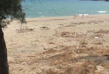 Augusta| Spiaggia Agnone sommersa da canne: i villeggianti annunciano esposto
