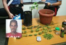 Floridia| Coltivava e confezionava marijuana in casa: Arrestato un 46enne