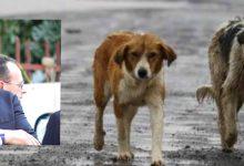 Siracusa  Nessun allarme sui cani randagi, Granata: Non si creino alibi per avvelenamenti