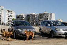 Augusta| Morso da un cane, finisce al pronto soccorso un giovane