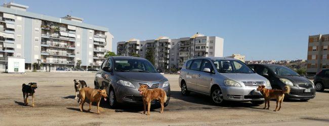 Augusta| Branco di cani in piazza Unità d'Italia. I cittadini sollecitano soluzioni