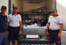 Augusta| Sequestrati 17 esemplari di tonno rosso pari a 1 tonnellata.