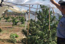 Carlentini | Droga nascosta in casa e una mini piantagione in giardino, carabinieri arrestano ventottenne