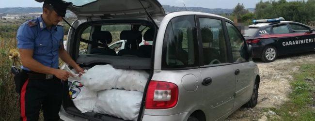 Augusta  Arrestati dai carabinieri 4 giovani sorpresi a rubare 200 kg di agrumi