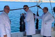 Siracusa| Veterinari dell'Asp impegnati nel monitoraggio dei molluschi bivalvi