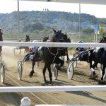 Siracusa| Trotto, Billionair Sferr atteso per il bis di vittorie nel centrale