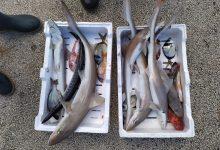 Augusta| Pesce privo di tracciabilità, multati ambulanti dalla Guardia costiera