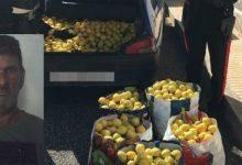 Solarino| Arrestato un uomo sorpreso a rubare 500 kg di agrumi