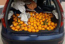 Siracusa| Furto d'arance, sorpresi tre uomini con gli agrumi in macchina
