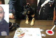 Siracusa| Il cane Zero trova la droga all'interno di un anfratto
