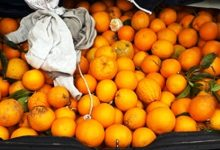 Lentini | A rubare arance nonostante il Coronavirus, cinque catanesi in manette in contrada Xirumi