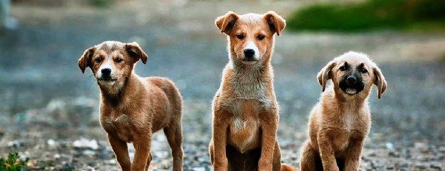 Lentini | Ambulatorio veterinario cercasi, il 16 marzo la scadenza per la presentazione delle manifestazioni d'interesse