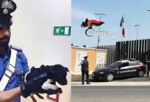 Augusta| Cagnolina incatenata e sofferente salvata dai carabinieri
