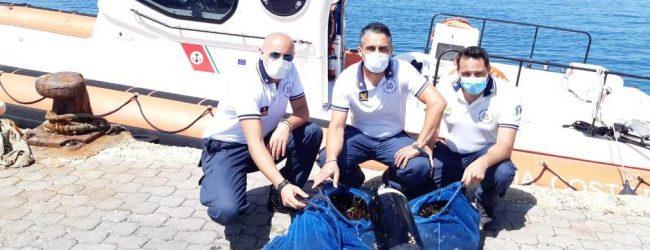 """Portopalo  Pesca illegale: a """"Chiappa"""", sub sorpreso con 1500 ricci di mare"""