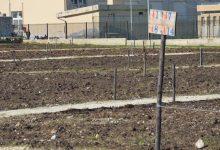 Siracusa| Consegnati 6 orti sociali viale Scala Greca