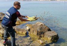 Augusta| Controlli filiera pesca: la Guardia costiera sequestra prodotti ittici