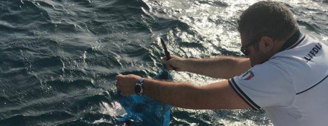 Augusta| Sequestrati 800 ricci di mare e 5 chilogrammi di pescato