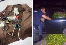 Avola| In quattro rubano oltre 2 tonnellate di limoni: restituite al proprietario
