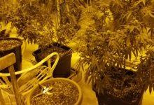 Augusta| Madre e figlio coltivavano marijuana: denunciati