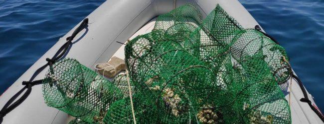 Siracusa  Sanzionati due sub per pesca abusiva
