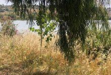 Augusta|  Incuria e degrado nell'ex Salina Regina