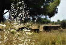 Augusta| Archeoclub diserba Megara Hyblaea