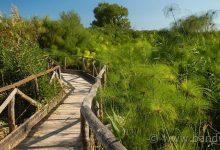 Siracusa| Pulizia riserva Ciane Saline