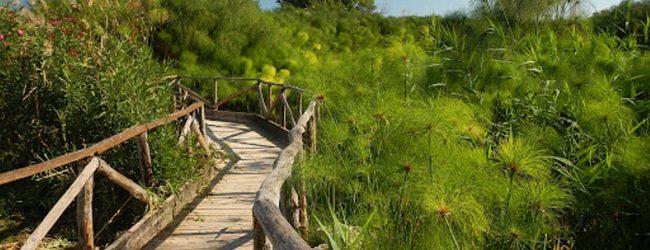 Siracusa  Pulizia riserva Ciane Saline