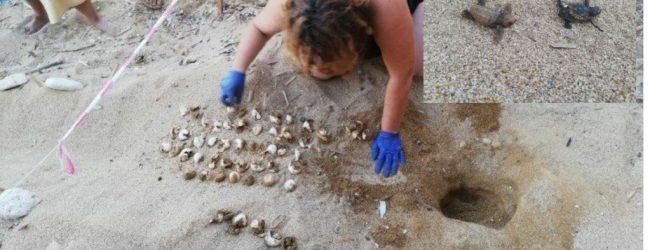 Siracusa  Tartarughe Caretta caretta: a Ognina la prima schiusa delle uova