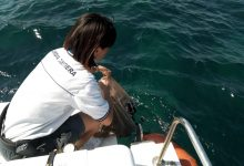 Augusta| Quattro diportisti soccorsi e 200 ricci sequestrati dalla Guardia costiera