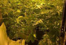Augusta| Coltivava marijuana in un garage: arrestato un 28enne