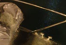 Augusta| Ristorante a Carlentini e rete nel porto megarese, sanzioni e sequestro dalla Capitaneria
