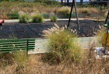 Augusta| Erbacce nell'area giochi del Monte: la denuncia di Mangano