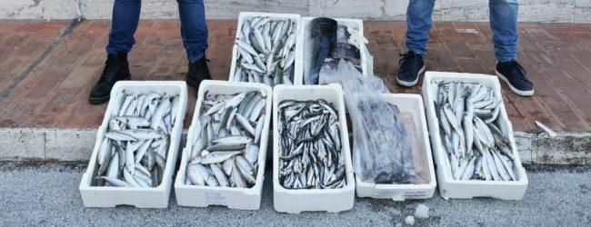 Augusta| Tonno Bianco: sequestri pesce in ristoranti, pescherie e bancarelle