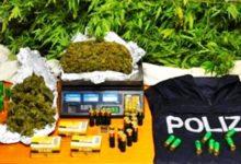 Lentini | Piantagione di marijuana, droga e armi in un podere di contrada Burione