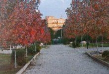 Siracusa| Domani si celebra la Festa dell'albero