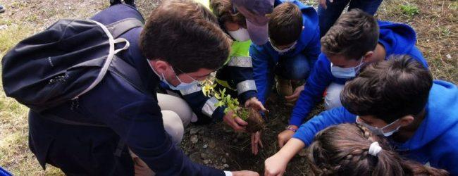 Augusta| Giornata dell'Albero: l'ha celebrata il Comune nelle scuole della città