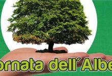 Augusta| Giornata dell'Albero le iniziative del Comune per domani nelle scuole.