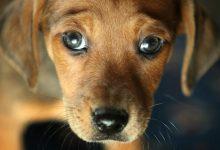 Siracusa| La Municipale denuncia una donna per l'abbandono di un cane