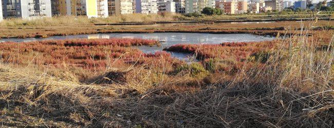 Augusta| Natura Sicula denuncia alla Procura la rimozione del canneto delle saline