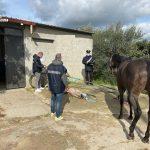 Noto | Su facebook il video di una corsa clandestina di cavalli: denunciati gli organizzatori