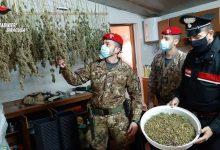 Augusta| Sequestrati 5 kg di marijuana, arrestato un incensurato che deteneva anche un serpente