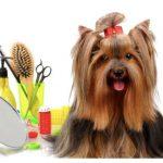 Siracusa | Ingiustificata chiusura delle toelettature per animali in Zona Rossa