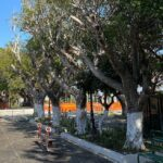 Augusta | Decoro urbano: palme potate e aree curate