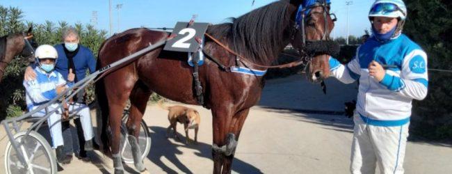 Siracusa | Trotto: Natale Cintura punta e vince sulla novità Canaletto RL