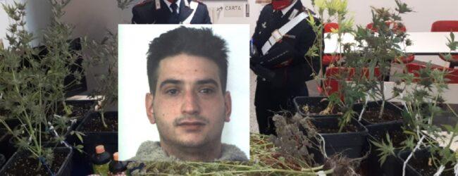 Floridia   Pusher con il pollice verde: arrestato dai carabinieri